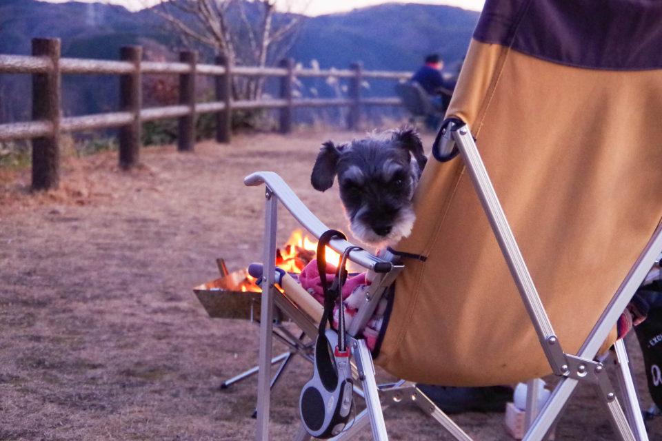 キャンプ犬として成長中。