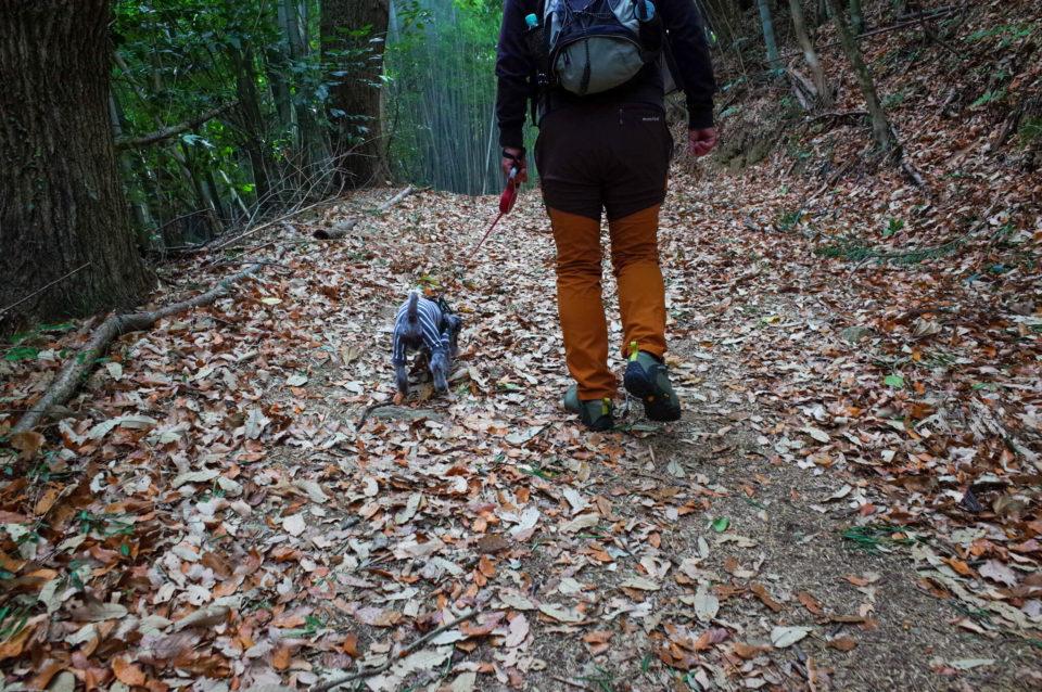 枯葉の絨毯は地面の凹凸が見えにくいけど歩いていて楽しい。