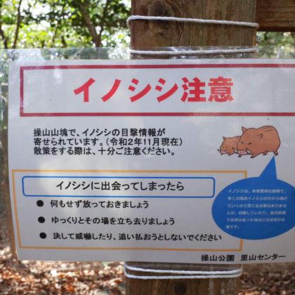 昨年沢田の民家にも出たニュースがありましたね。