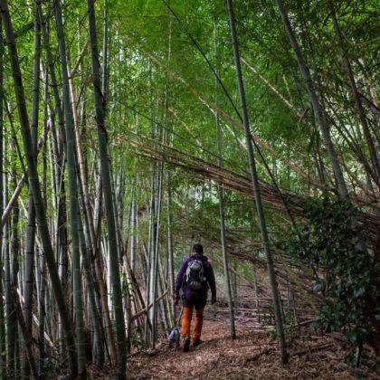 まずは高顕寺裏の竹林を抜けて