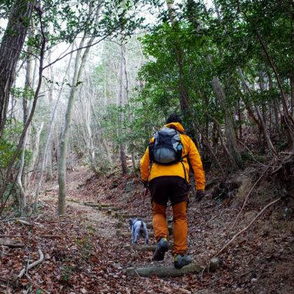 飯盛山の手前は少しだけ山道