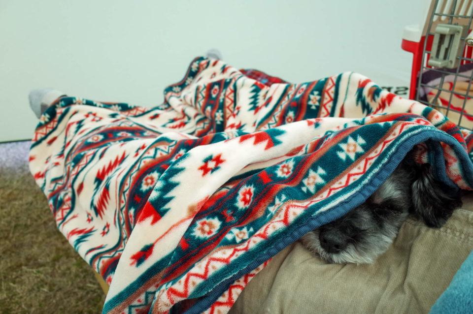 ちよまるくんは夫のお股で寝るのが好き