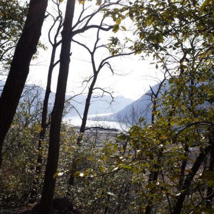 木の合間から吉井川が見えた