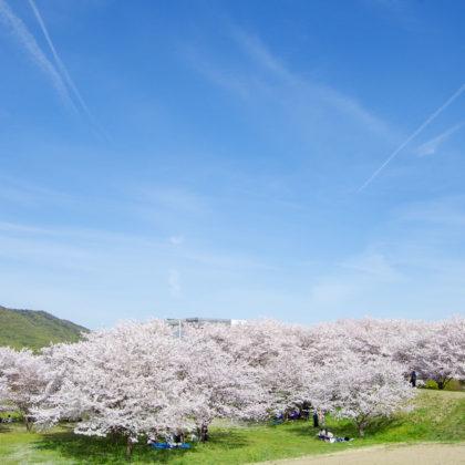 青空と龍ノ口山と桜