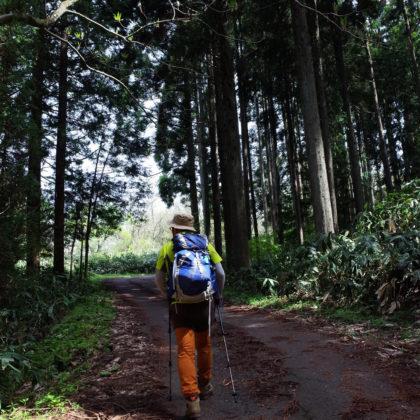 杉林の中、アスファルトの道をひたすら登ります。