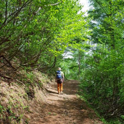 新緑トレッキング。傾斜が緩いから散歩気分で登れます。