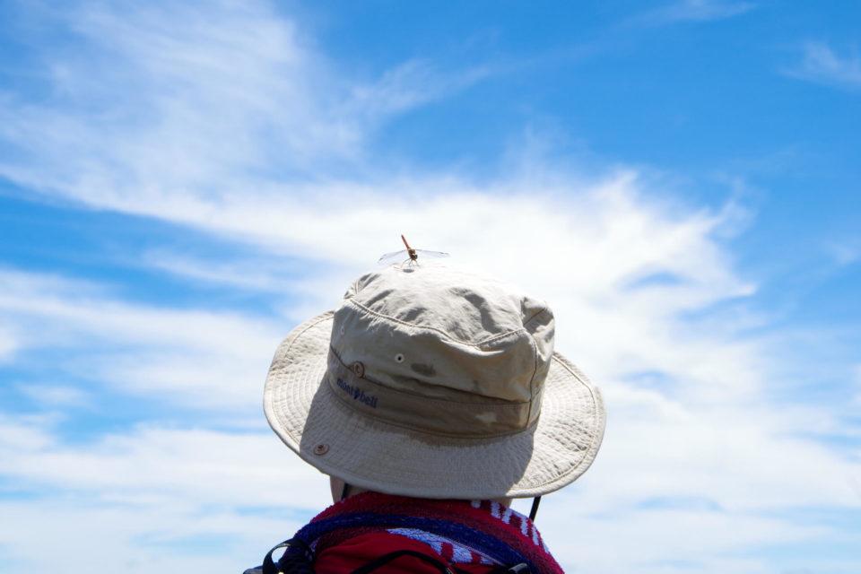 おじさん(夫)の汗染み帽子にとまるトンボ